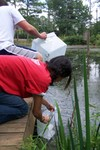 Fish_release_91208_041